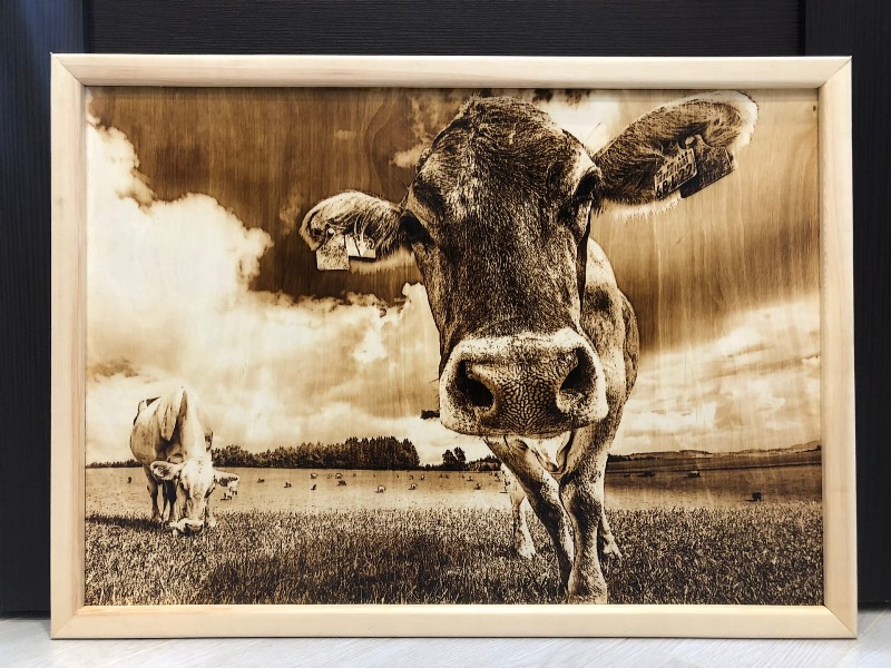 Pyrography-cow